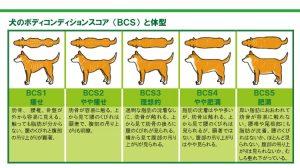 犬 ボディコンディションスコア
