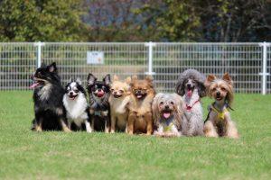 犬全員集合