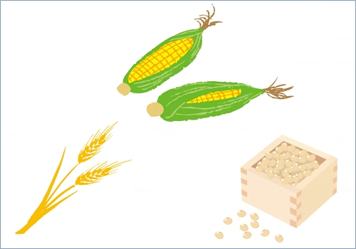 トイプードル 穀物アレルギー