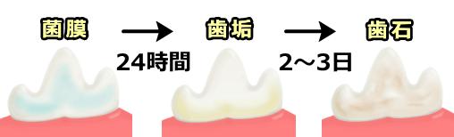 shimen-chikusekibutsu