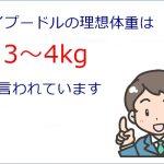 トイプードルの理想体重は?|肥満or痩せ気味をチェック!