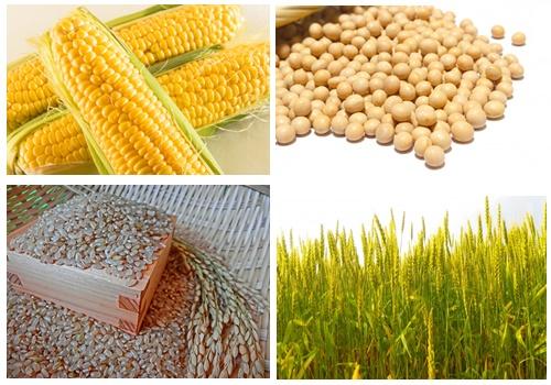 穀物・穀類の画像