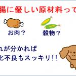 トイプードルの消化不良の原因と消化吸収率87%のおすすめドッグフード