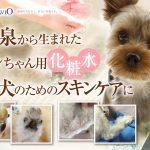 【犬用化粧水アヴァンスの評判】多数の口コミと実際に使用感を徹底レビュー