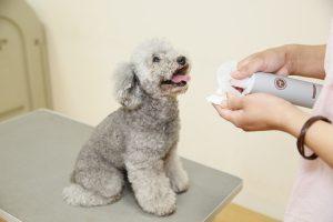 犬用化粧水アヴァンスの評判