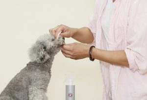犬用化粧水アヴァンスの使用感