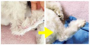 犬用化粧水アヴァンスの効果