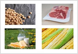 犬の食物アレルギーになりやすい食材のイメージ画像