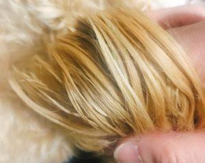 キレイな毛艶の犬の画像