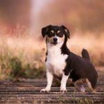 送料かかるのはイヤ!サプリ愛用者が選ぶ送料無料のおすすめ犬用サプリ9選
