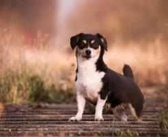 かわいい犬の画像