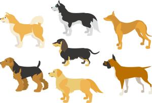 犬の全身イラスト画像